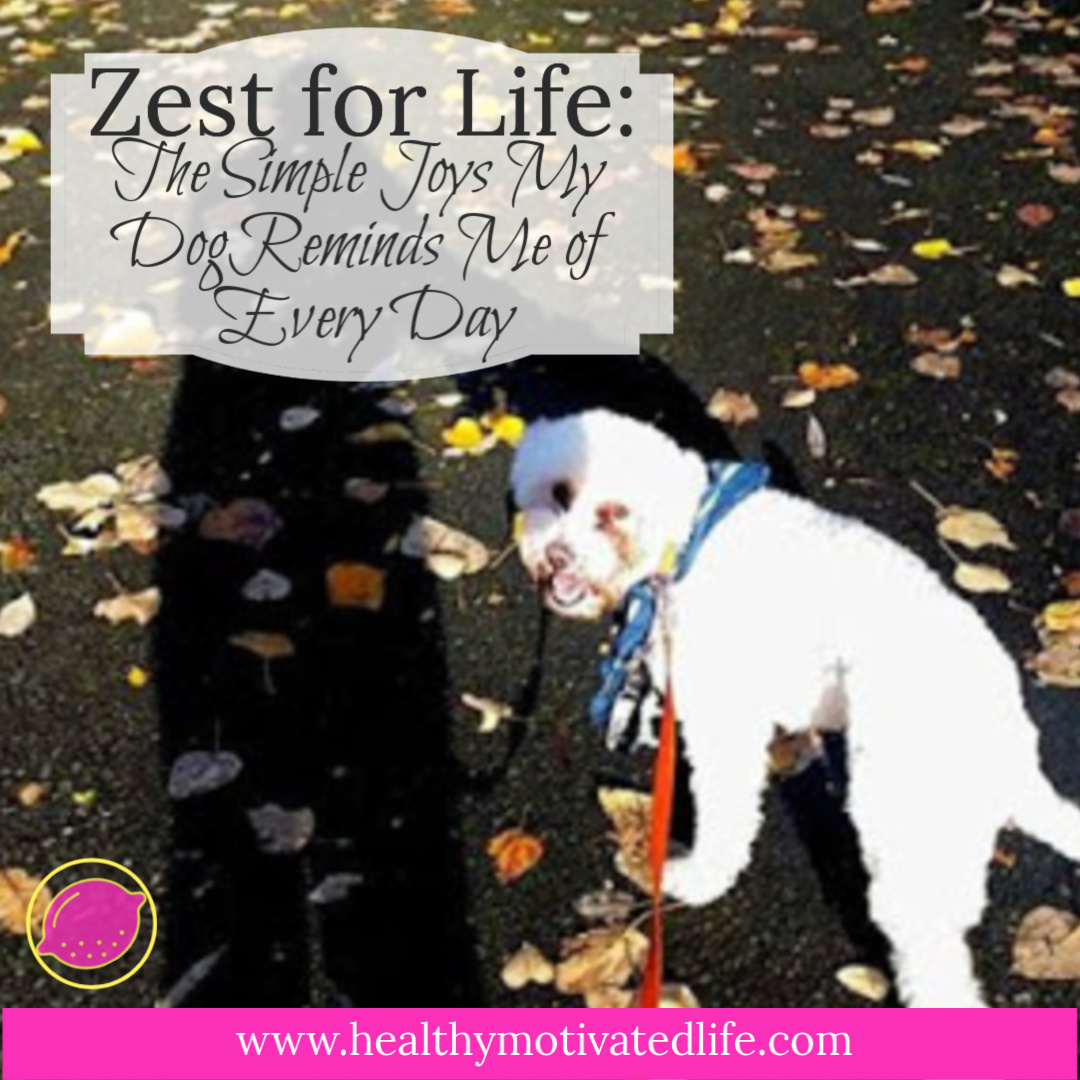 "The ""Zest for Life"" that my dog exemplifies has taught me how I should strive to live my own life."