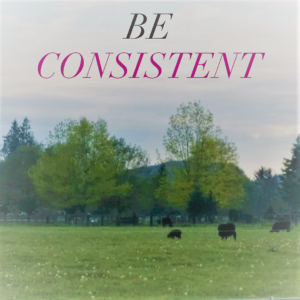How to maintain your consistency toward reaching your goals