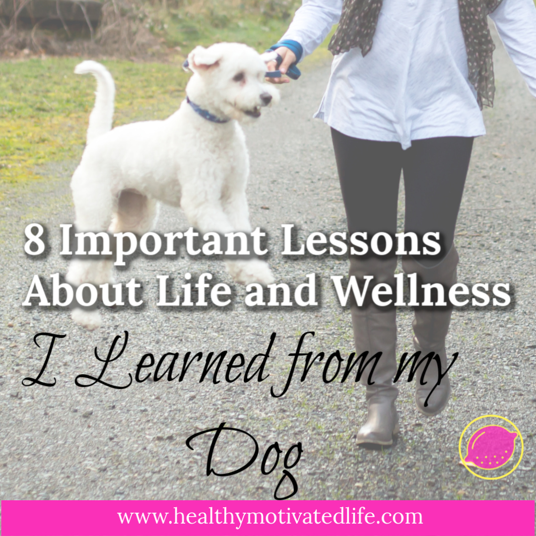 My sweet little dog, Bentley has taught me so much over the past six years, but 8 important lessons about life & health truly stand out.