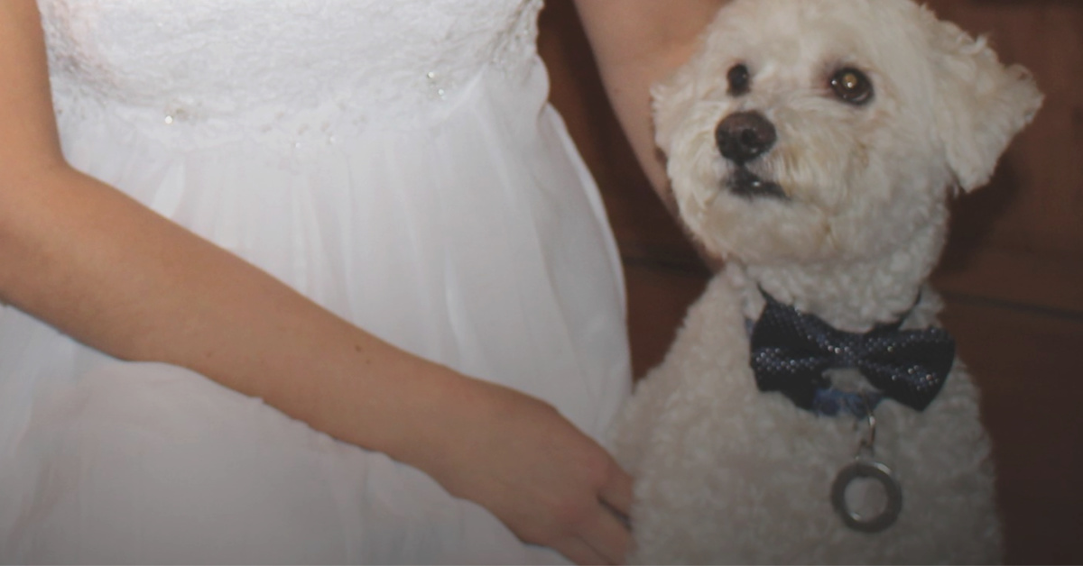 My Dog Has Helped Me to be a Better Wife to My Husband