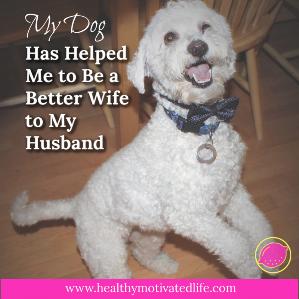 When I adopted my little poodle mix, I never would have predicted how much help he would be in my day-to-day life.